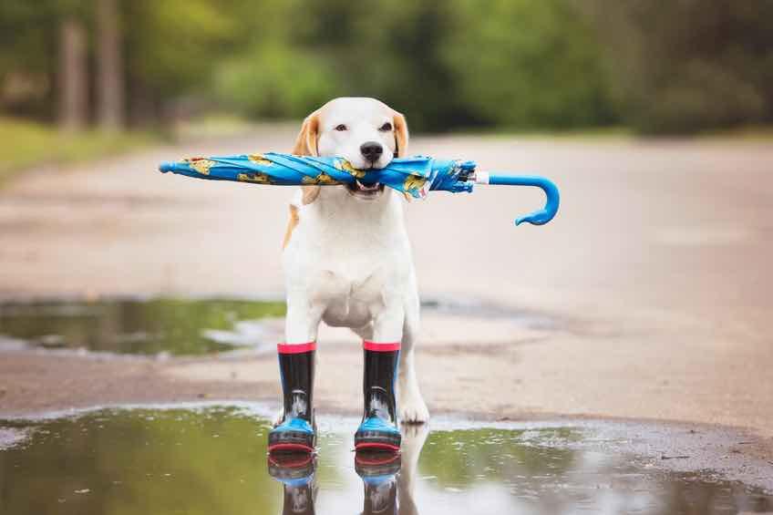 【 松葉杖を、雨の日に使うと危険がいっぱい 】